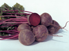 Beetroot ~ Jannis (Early May)